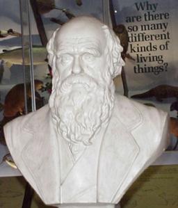 Darwin bust