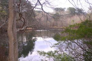 Black Pond, Wellfleet