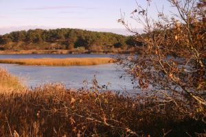 Herring River estuary