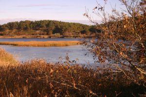 Herring River estuary