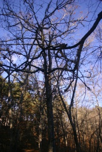 Hung branches