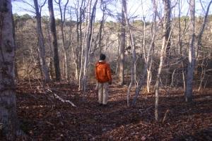 The trail minus foliage