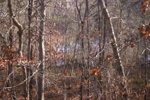 Walker trail pond