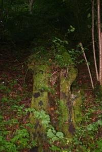 Moss near Blanc