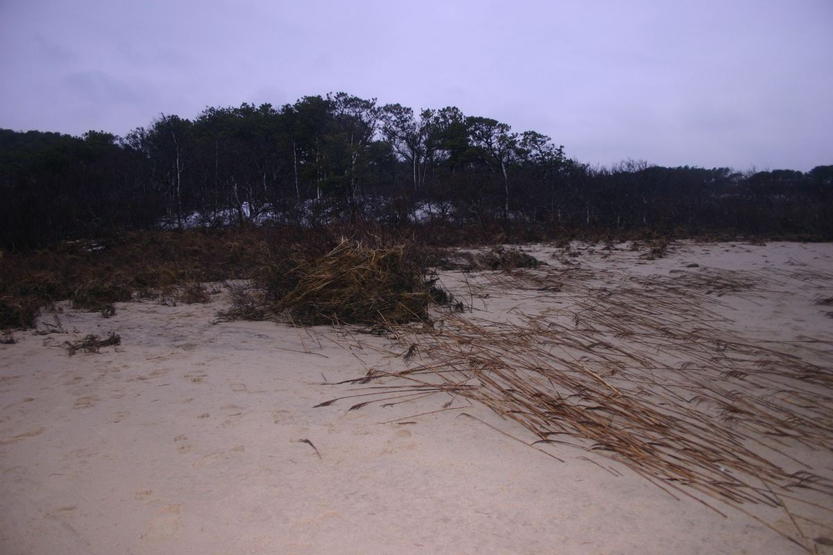 Impact of storm surge