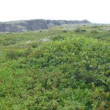 Terrain, hill of blueberries