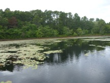 Williams Pond