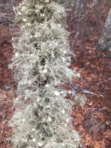 Beautiful lichen