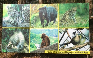 Fauna of Shivapuri