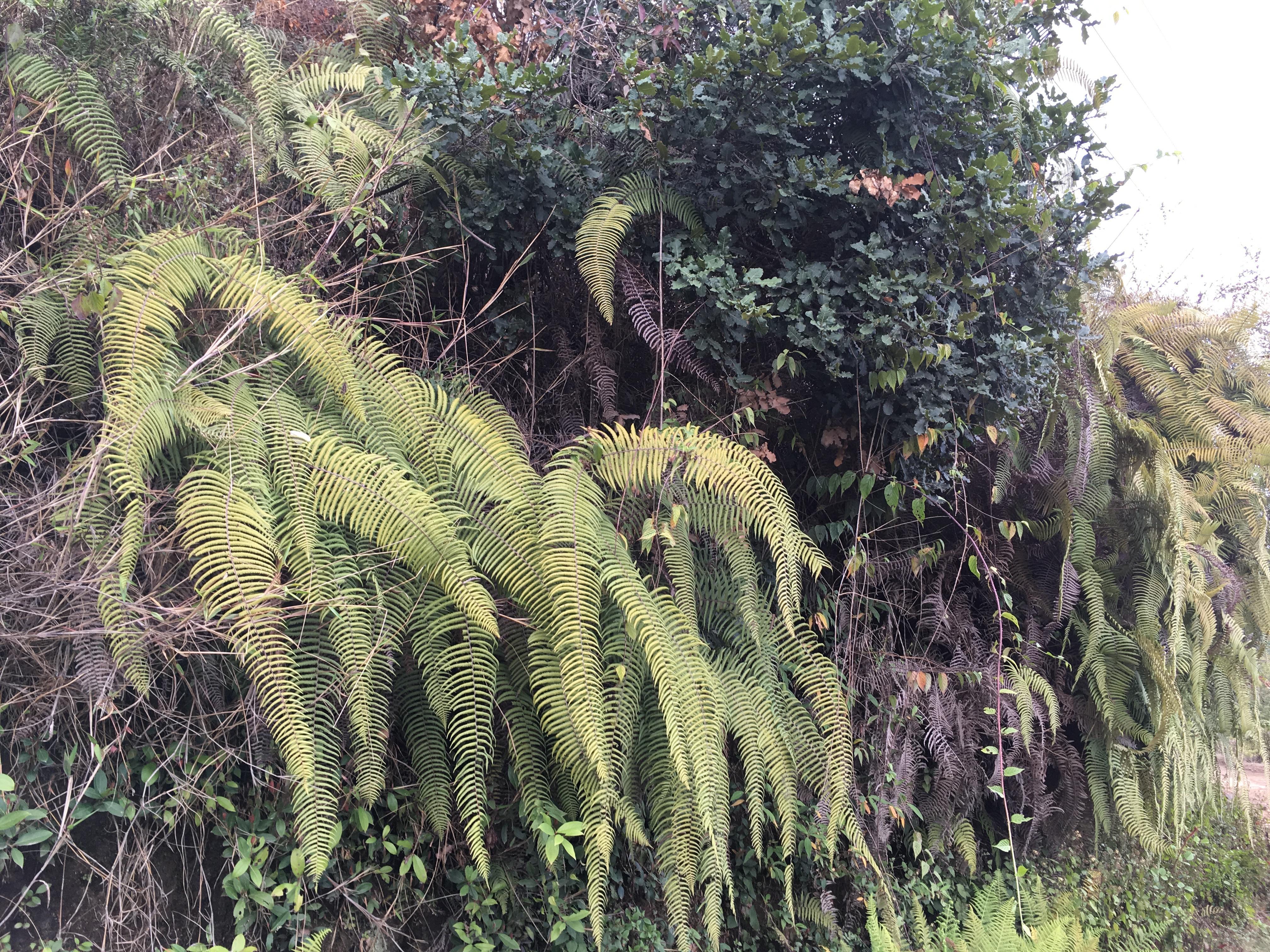 Beautiful fern cacscades