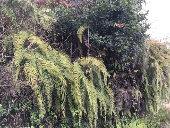 Beautiful fern cacscades