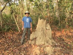 Next to dormant termite mound